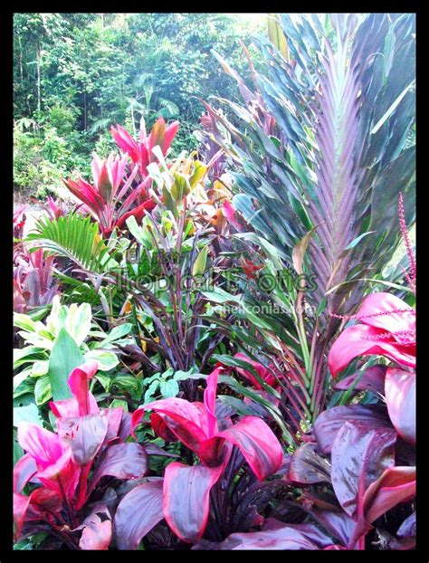 landscaping with tropical plants full sun cordylines