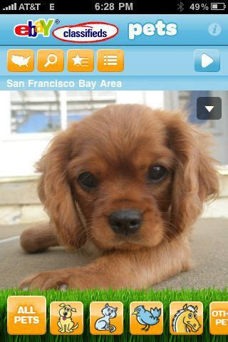 ebay classifieds puppies 86 daily dose you can adopt a pet on ebay classifieds whysurfswim