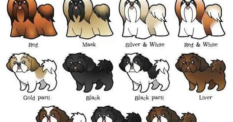 imperial shih tzu weight chart shih tzu color chart pictures to pin on thepinsta