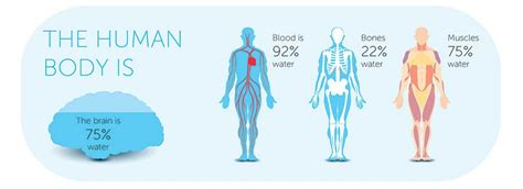 hydration vs dehydration reaction how dehydration is killing your performance at the office