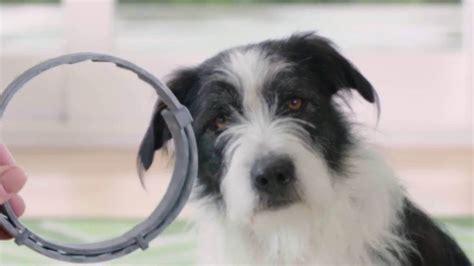 flea collar seresto seresto flea collar for dogs and how to use for the seresto flea collar