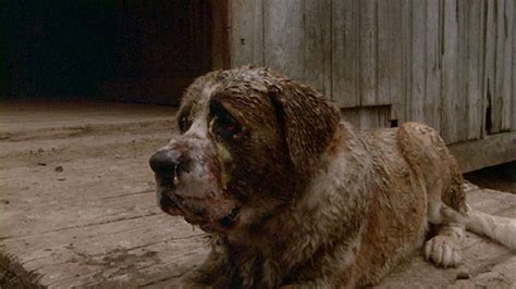 what of was cujo review cujo the carousel podcast