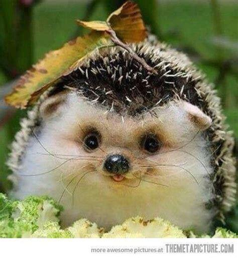 cute baby hedgehog smiling happy baby hedgehog cute stuffs pinterest