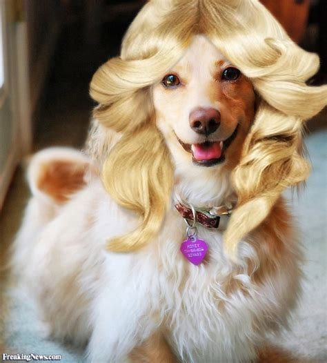 haired dogs with blond hair pictures freaking news