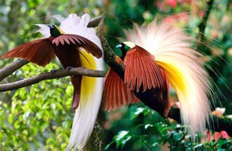 cendrawasih bay national park indonesia tourism