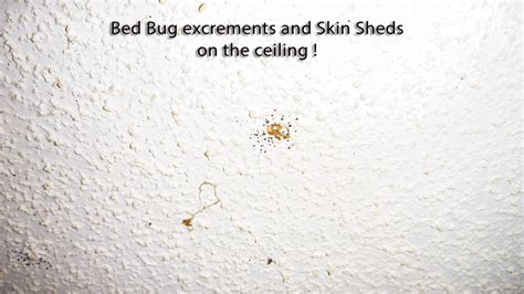 white bed bugs the worst case of bed bug infestation quest pest