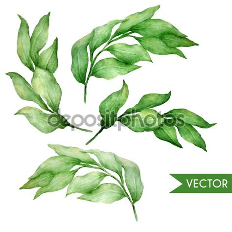 vector leaf tutorial 27 best images about herbs on pinterest print