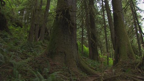 Best To Search King5 Best Place To Find Bigfoot Is Olympic National Park