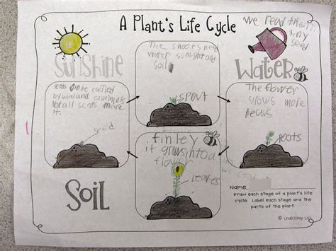 biography lesson plan for 2nd grade plant life cycle plant life cycle activities 3rd grade 1000 ideas about