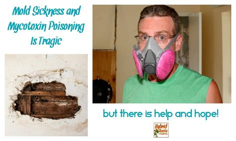toxic mold resources