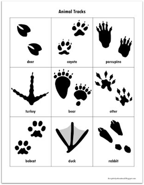 printable animal tracks flashcards relentlessly fun deceptively educational february 2013