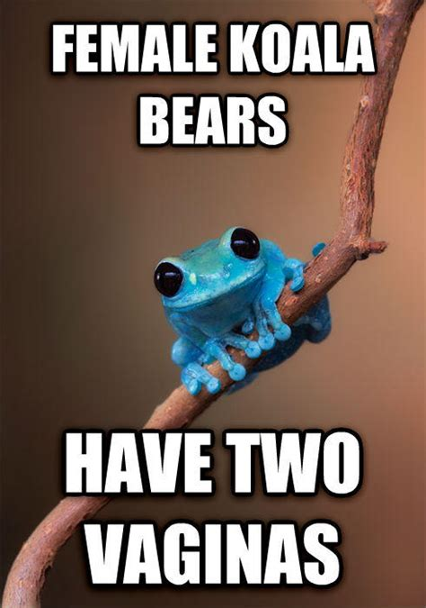 Fact Frog Meme - image 679217 small fact frog know your meme