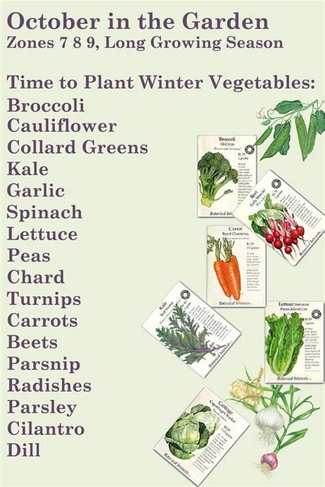 zone 6 gardening winter garden im in zone 6 so i will try sowing these