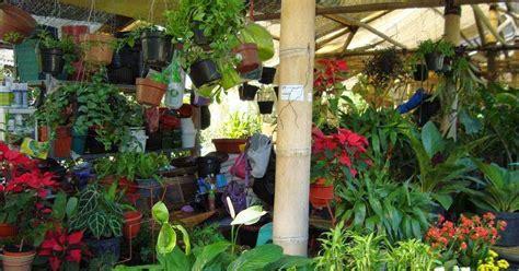 Lu Hias Untuk Taman 7 manfaat tanaman hias untuk kesehatan jual tanaman hias