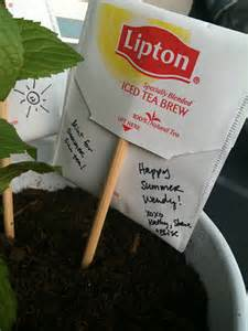 hostess or housewarming gift idea mint plant with teabag