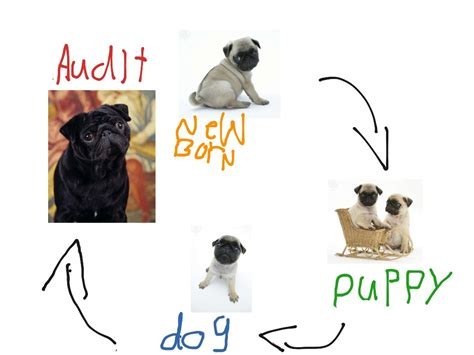 cycle of a pug pug cycle 28 images touring bike black pug bike repair 17 best images about gifs