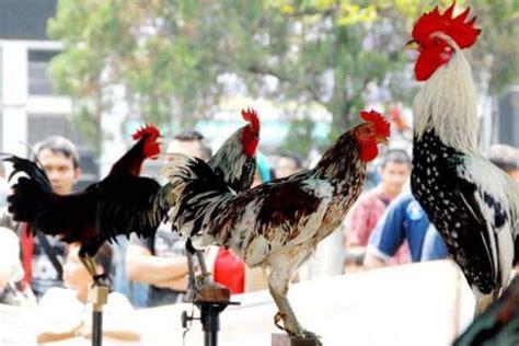 Jual Lu Hias Yogyakarta Jual Ayam Hias Jakarta Jogja Bandung Termurah Di Indonesia