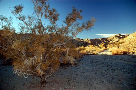 art in nature portraits from the desert anza borrego anza borrego desert dc langer