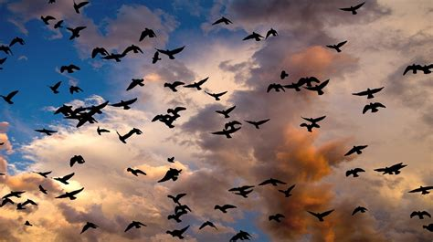 wild birds unlimited birds switch abruptly to fly by