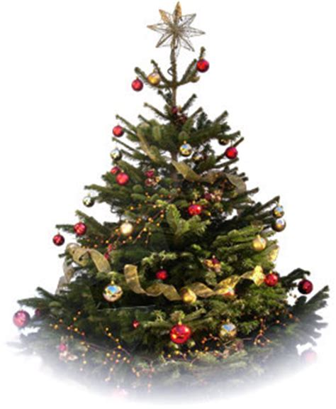 a christmas tree decorated christmas trees london christmas trees decorated
