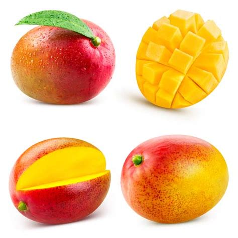dogs and mango can dogs eat mango or are mangoes bad for dogs and why