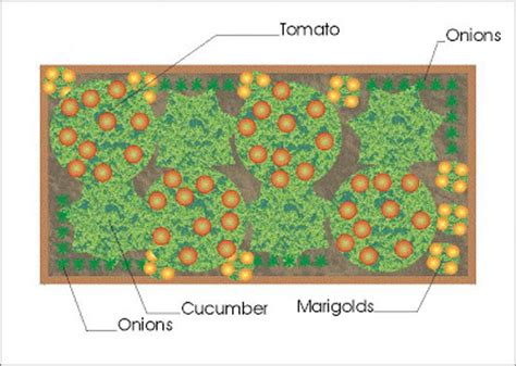 A Companion Planting Vegetable Garden Layout Growing The Companion Vegetable Garden Layout