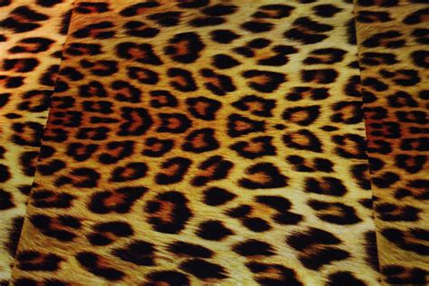 leopard print hydrographic filminfected home