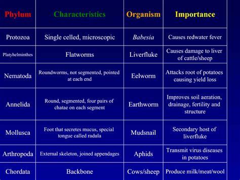 classes in order bio world animal classification