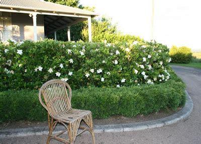 house  gardenia hedge