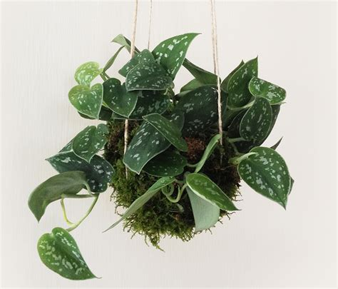 Hanging Plant | kokedama style hanging plant balls ideas realized