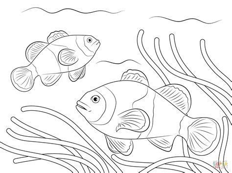 ocellaris clownfish coloring page free printable