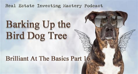 when the dogs bark treed a year on the trail of the longtails classic reprint books audio brilliant at the basics part 16 barking up the