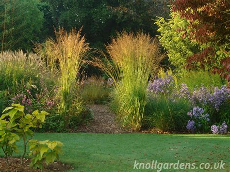 Grass Garden by Magnificent Moor Grasses Knoll Gardens Ornamental Grasses And Flowering Perennials