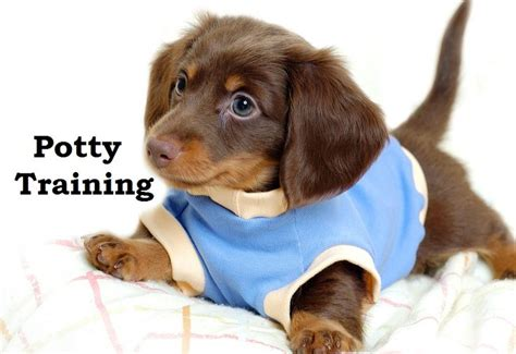 potty tips for puppies when a eats its own lighted leash potty tips