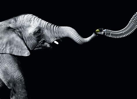 designboom elephant elephant trunk influenced bionic handling assistant by
