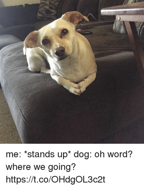 words related to dogs me stands up oh word where we going httpstcoohdgol3c2t word meme on sizzle