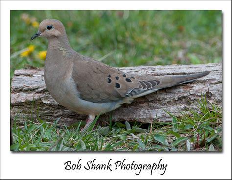 most common backyard birds most common backyard birds in the us photo gallery bird gogo papa