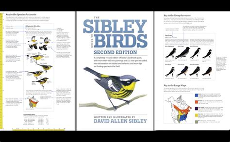 10 000 birds the sibley guide to birds second edition