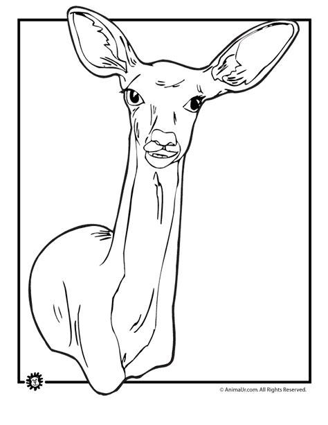 doe deer coloring pages deer coloring pages doe coloring page animal jr