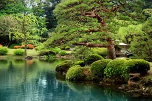 calm zen lake and bonsai trees in tokyo garden wall