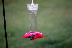 top 28 water to sugar ratio for hummingbird feeder
