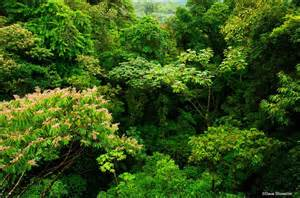 Canopy Layer Rainforest by Canopy Layer Of The Rainforest Green Pinterest