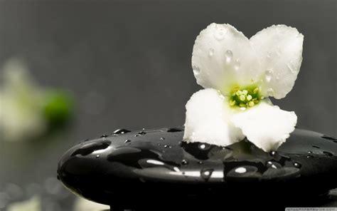 imagenes zen hd vivir de forma zen taringa