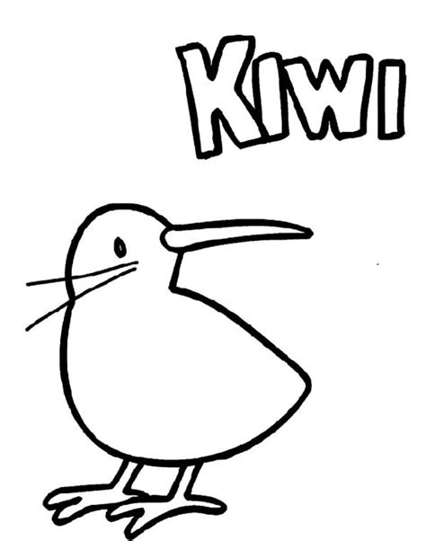 kiwi bird coloring page clipart best