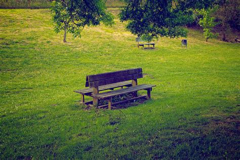 bench in nature park bench nature photos on creative market