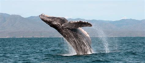 glass bottom boat chattanooga tn whale come to whale season cheapcaribbean