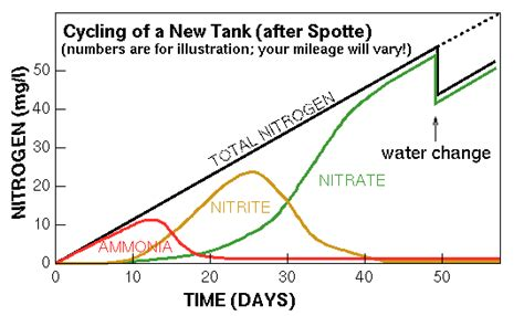 Do I Need To Cycle Tank If I Detox It by Sjhsrc Zebrafish