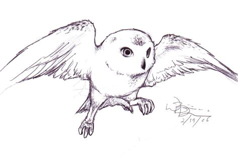 harry potter coloring pages owl hedwig by blondboy100886 on deviantart