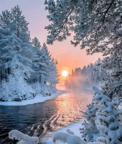 beautiful winter best 25 snow forest ideas on snowy woods