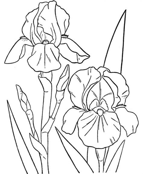 tropical flowers coloring pages coloring home